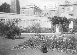 A small corner of the elaborate Denbies Gardens, with the beginning of the run of a quarter mile of glasshouses (Ranmore Archive)