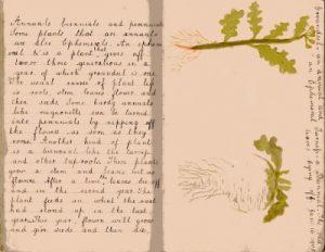 Frank Woodman's notebook 96 401