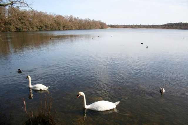 Frensham Great Pond, a noted feature of Ann's home area, Geograph, copyright