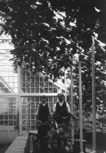 A garden boy and gardener in Denbies glasshouses,