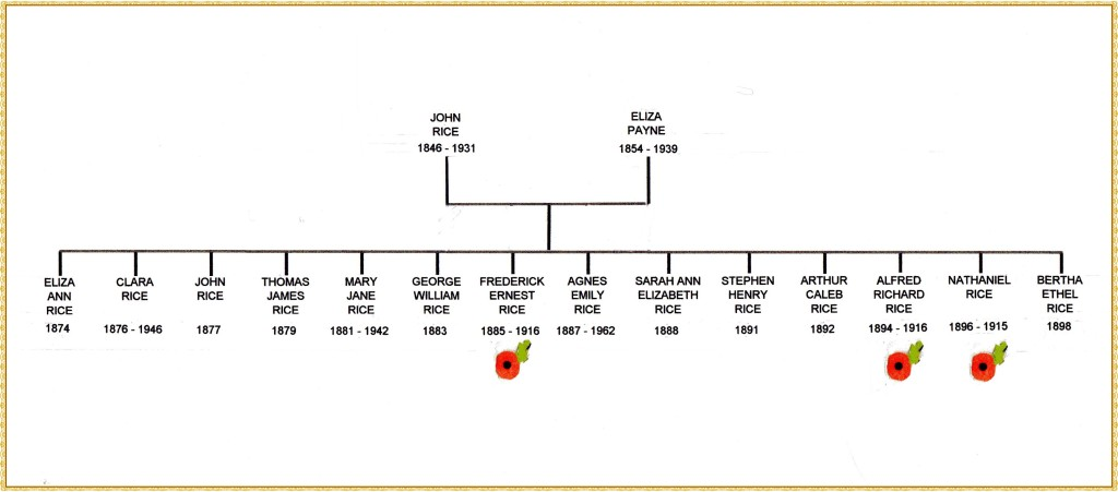 Rice family tree edited